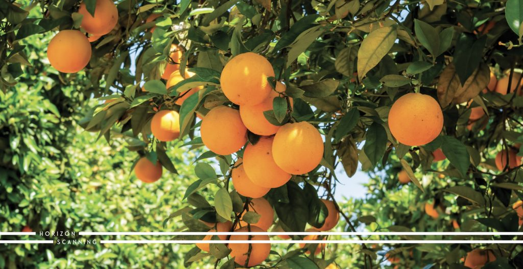 The future of agricultural technologies - image oranges