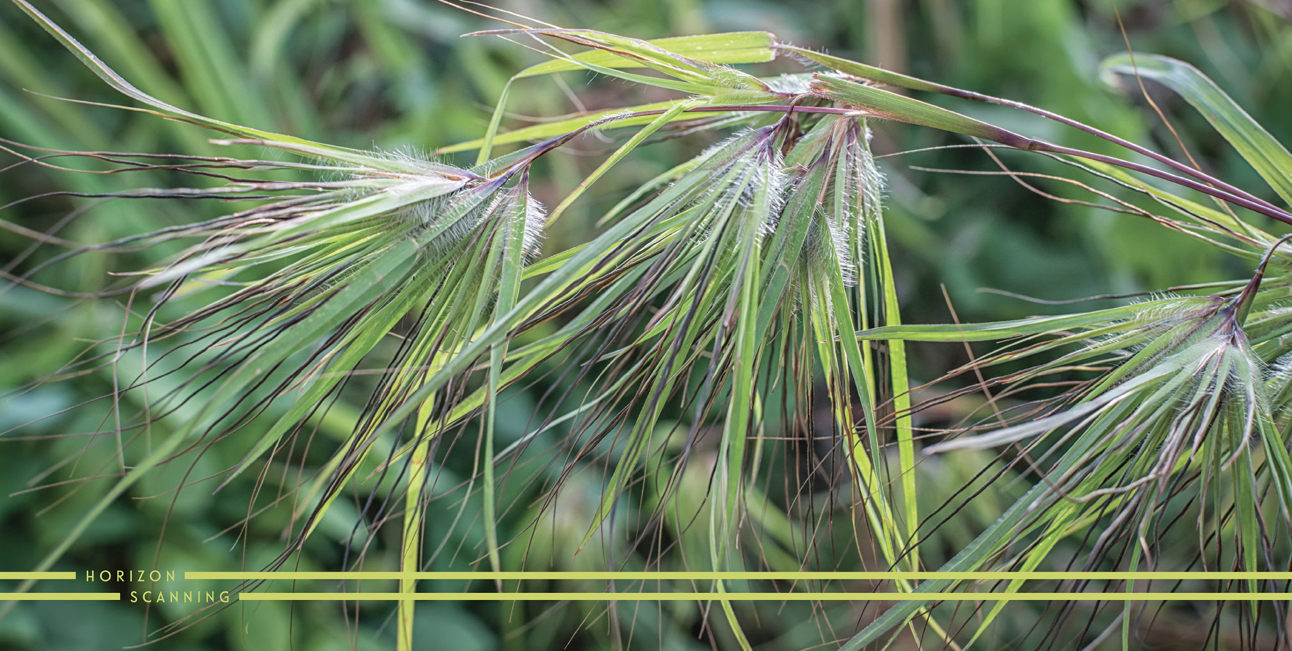 Agricultural technologies - Image Grasses
